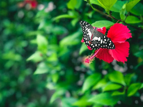Free stock photo of 4k wallpaper, blur, butterflies, close up
