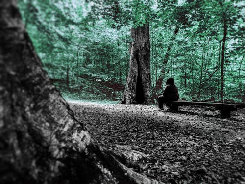 Foto d'estoc gratuïta de #forest #lightgreentone #outside # stone-mountain-photography #person #story #emotion