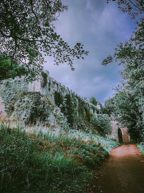 Imagine de stoc gratuită din abandonat, arbori, călătorie, castel