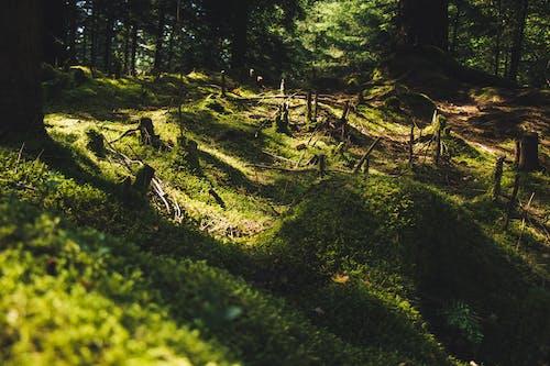 ağaç kütüğü, ağaçlar, büyüme, çevre içeren Ücretsiz stok fotoğraf