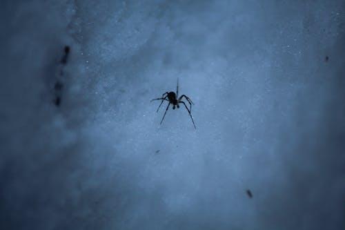 Základová fotografie zdarma na téma odstín, pavouk, sníh, tmavý