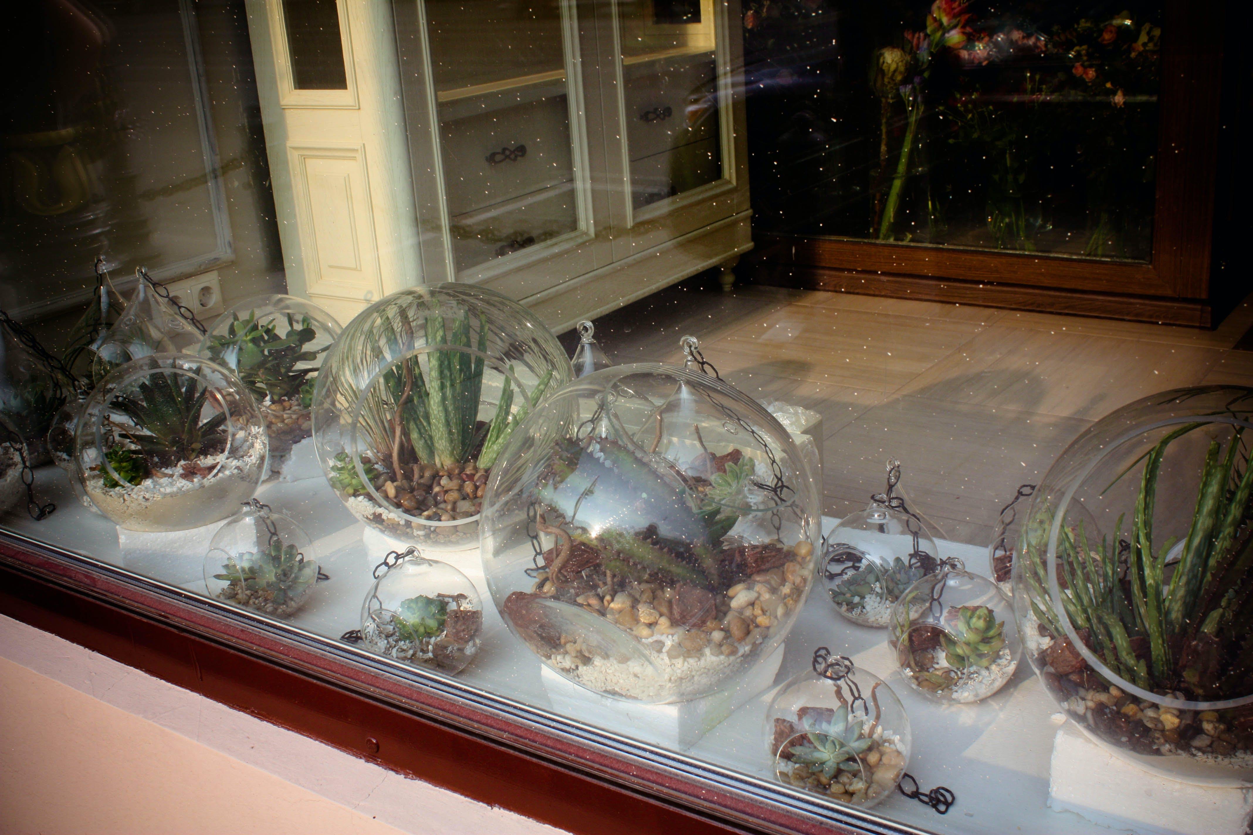 Free stock photo of decorative plants, showcase, succulents