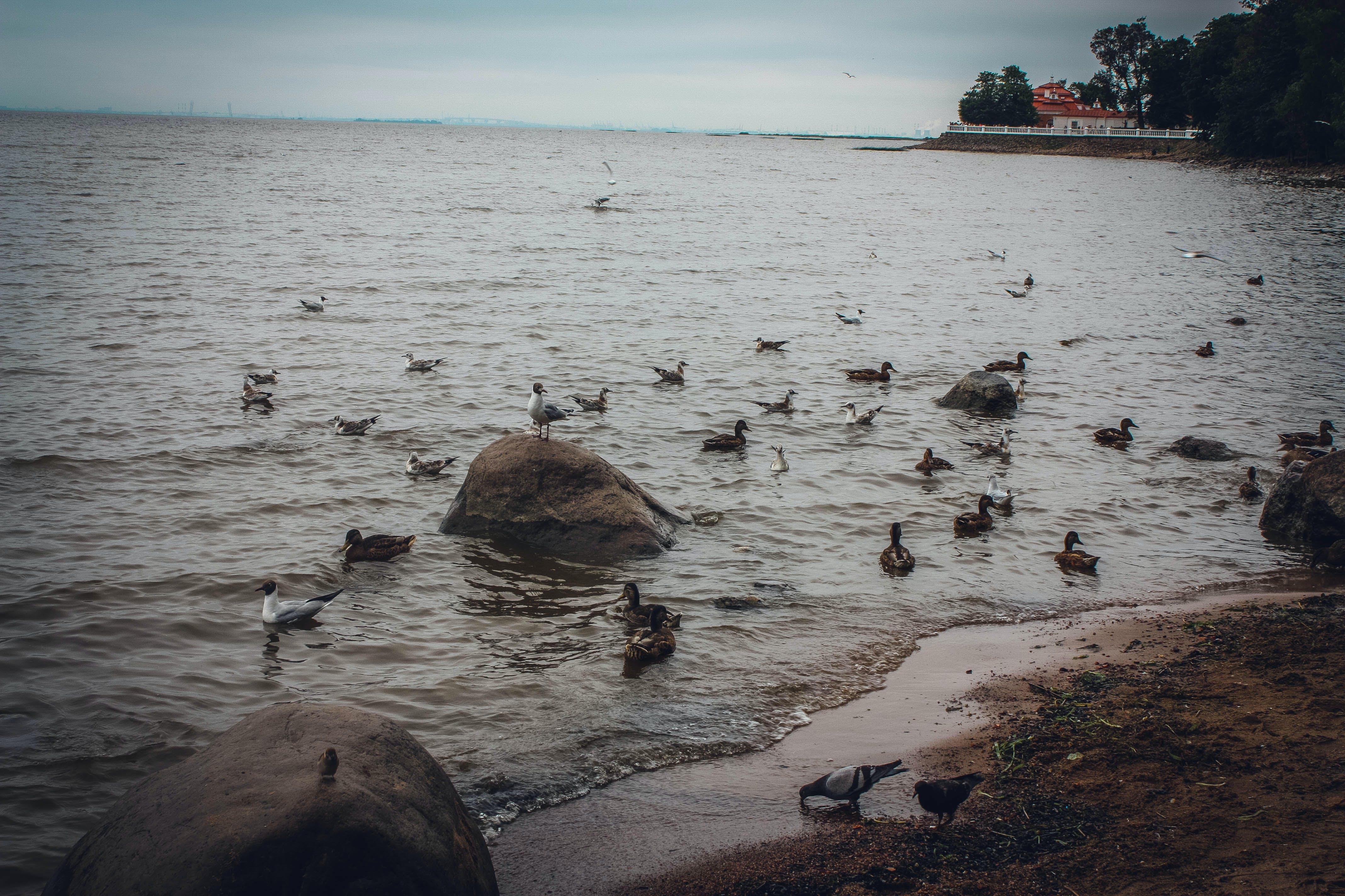 Free stock photo of beach landscape, bird, duck, landscape