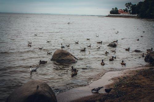 Gratis lagerfoto af landskab, måger, strand landskab, vand
