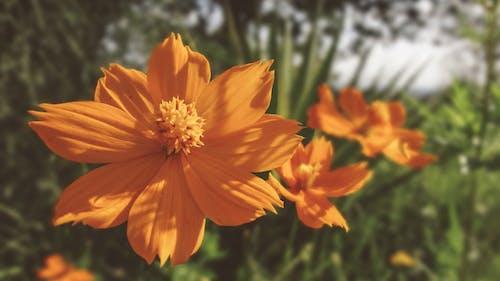 açan çiçekler, bitki örtüsü, çevre, Çiçek açmak içeren Ücretsiz stok fotoğraf