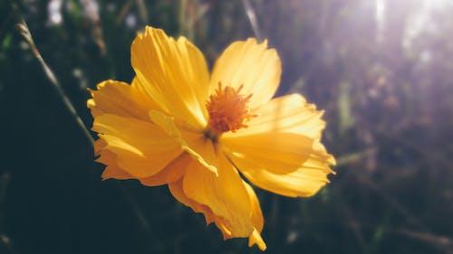 bitki örtüsü, Çiçek açmak, duvar kağıdı, makro içeren Ücretsiz stok fotoğraf