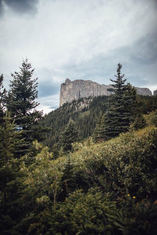 Fotobanka sbezplatnými fotkami na tému 4k tapety, Alberta, borovice, cestovať