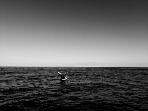 Photos gratuites de abysses, animal, australie, baleine