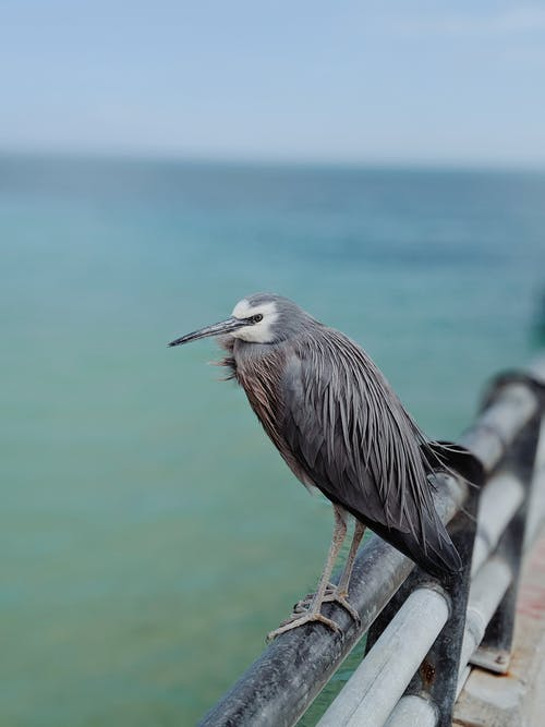 Selective Focus Photo of Gray Bird Perched on Metal Railing
