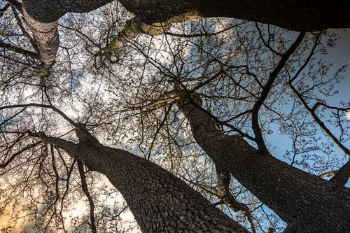 Základová fotografie zdarma na téma holé stromy, nebe, strom, stromy