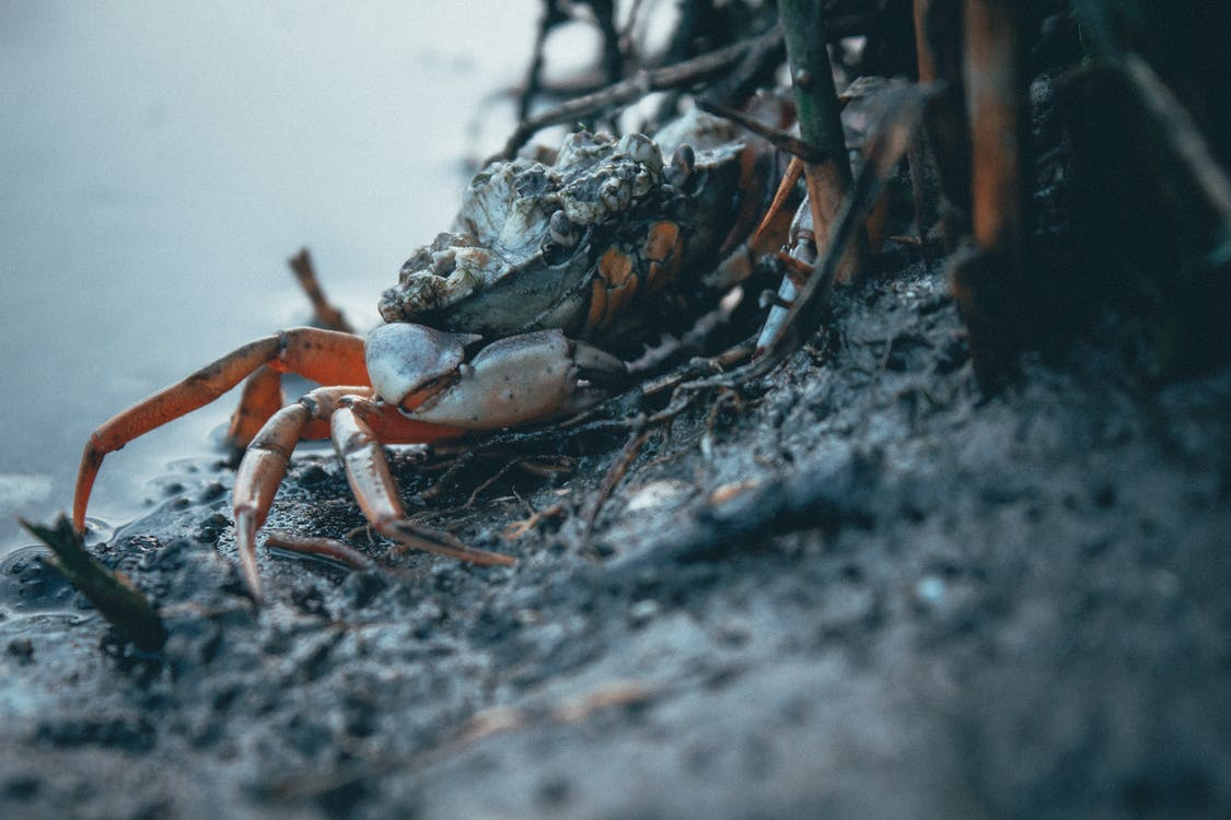 à beira-mar, azul, caranguejo eremita