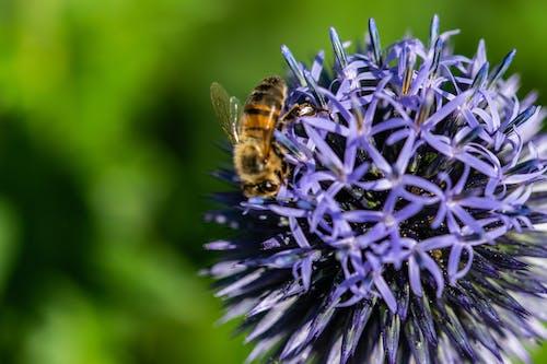 Ảnh lưu trữ miễn phí về con ong