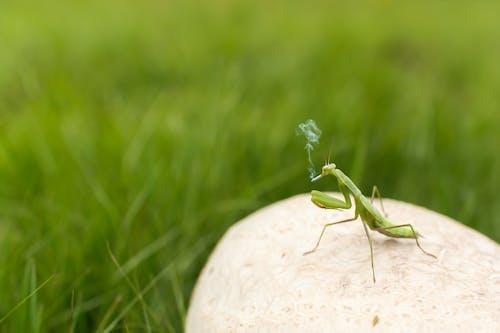 動物, 已編輯, 抽煙者, 昆蟲 的 免费素材照片