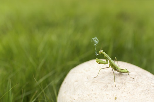 Free stock photo of animal, insect, smoking, funny