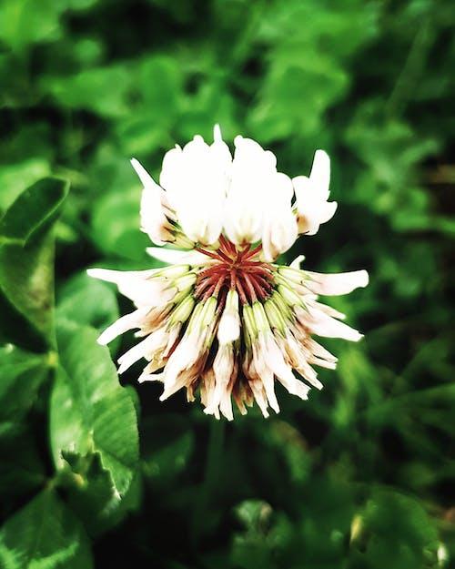 Foto d'estoc gratuïta de blanc, flor, fotografia de natura, natura