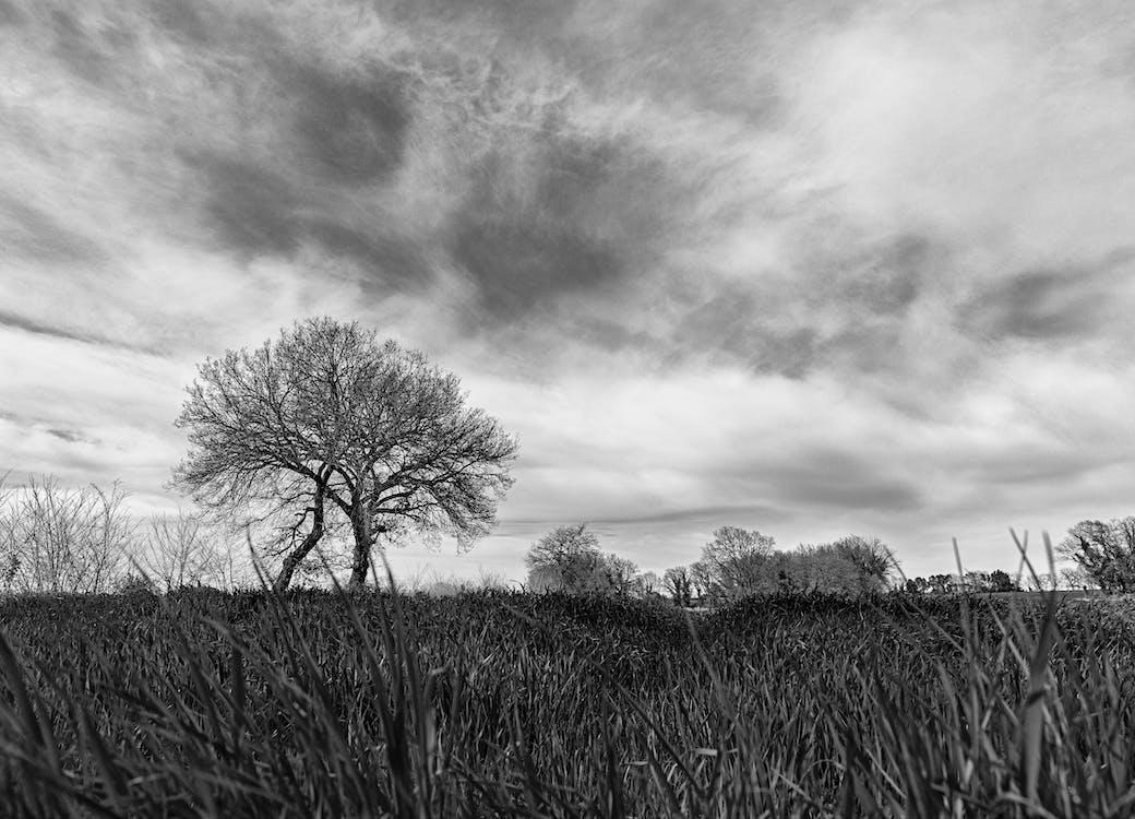 Foto d'estoc gratuïta de arbre, hivern, natura