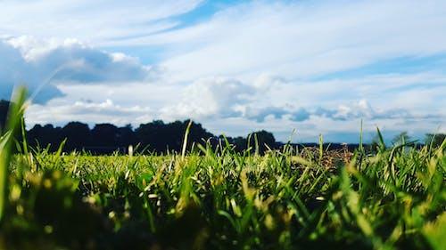Foto d'estoc gratuïta de blau, cel, cel blau, herba