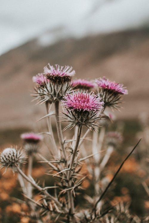 Free stock photo of autumn, desert, flower