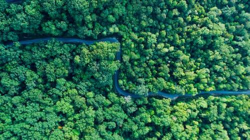 Бесплатное стоковое фото с деревья, дневной свет, дорога, дорожка
