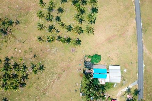 Бесплатное стоковое фото с деревья, дневное время, дома, дорога