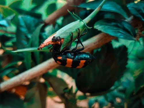 Foto stok gratis beetle, bunga, bunga-bunga
