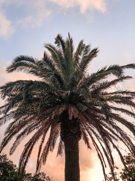 cestování, exotický, kokosová palma