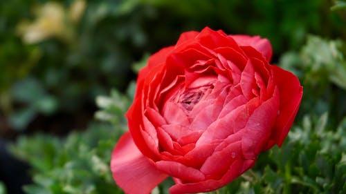 Kırmızı çiçek Bitki