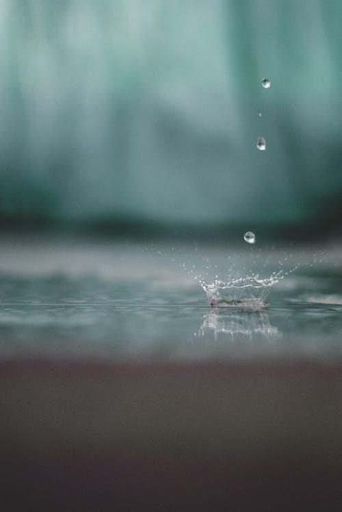 天氣, 專注, 戶外, 模糊的背景 的 免费素材照片