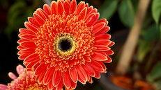 summer, petals, colorful