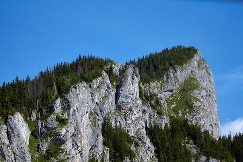 Foto d'estoc gratuïta de arbres, cara de roca, muntanya, verdor