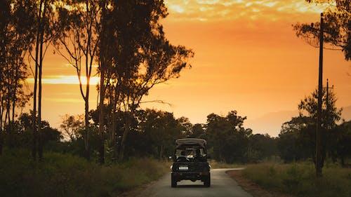 Бесплатное стоковое фото с автомобиль, гора, день, деревья