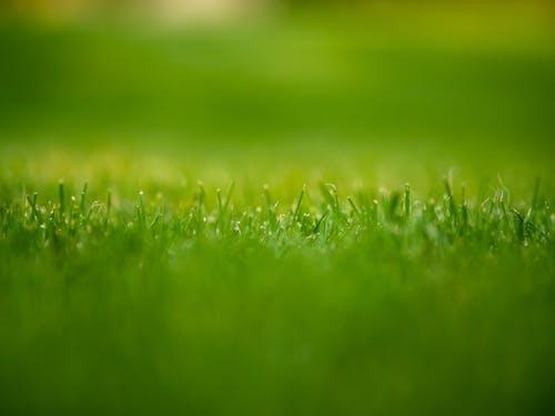Бесплатное стоковое фото с газон, деталь, трава