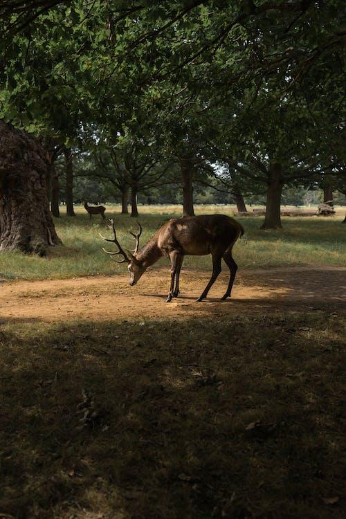 A Deer Under A Tree