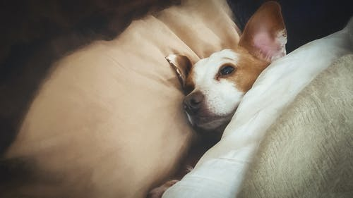 Free stock photo of bed, blankets, cuddle, cuddling