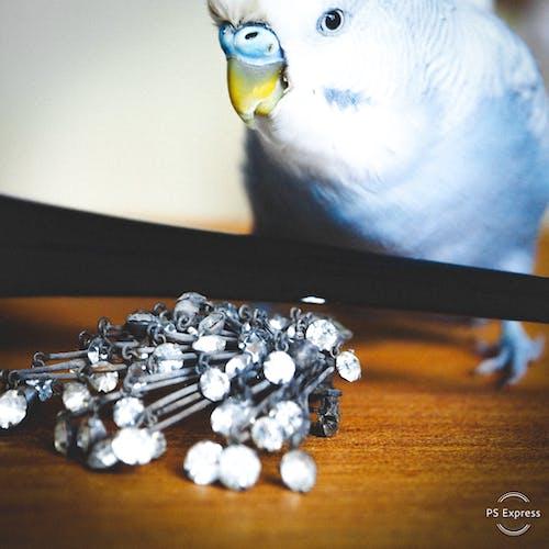 寵物, 寶石, 看著 的 免费素材图片