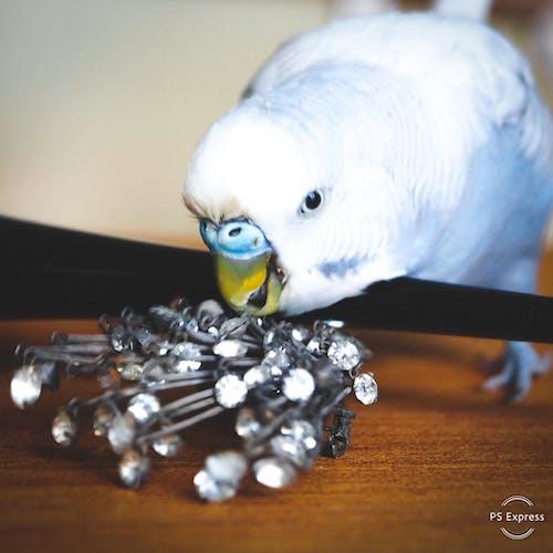 動物, 寵物, 想 的 免费素材图片
