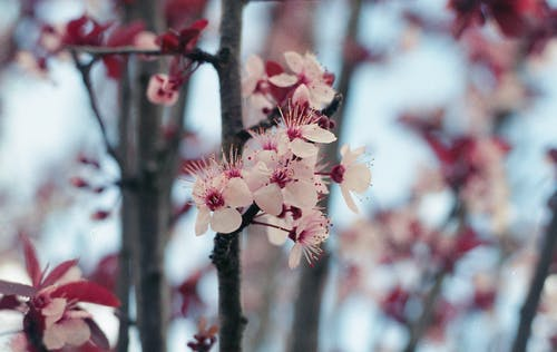 Photos gratuites de 35mm, analogique, belle fleur, film