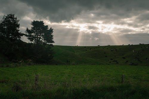 Foto profissional grátis de céu, raios de luz
