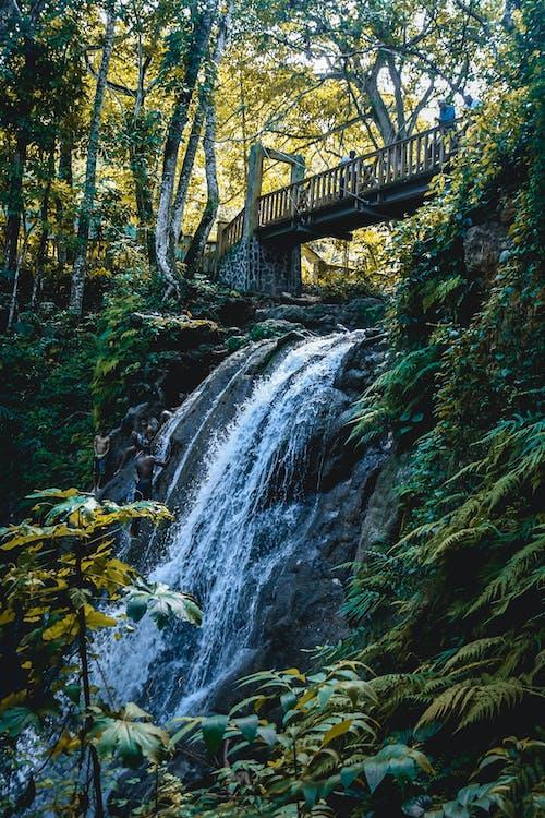 Ilmainen kuvapankkikuva tunnisteilla joki, kallio, kasvit, lehdet