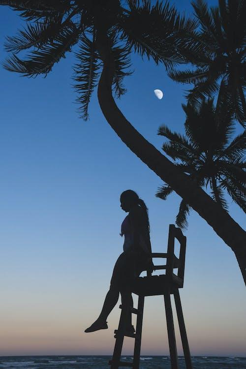 アダルト, くつろぎ, ココナッツの木, シースケープの無料の写真素材