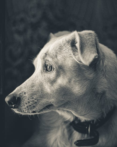 Monochrome Side View Photo Of Dog