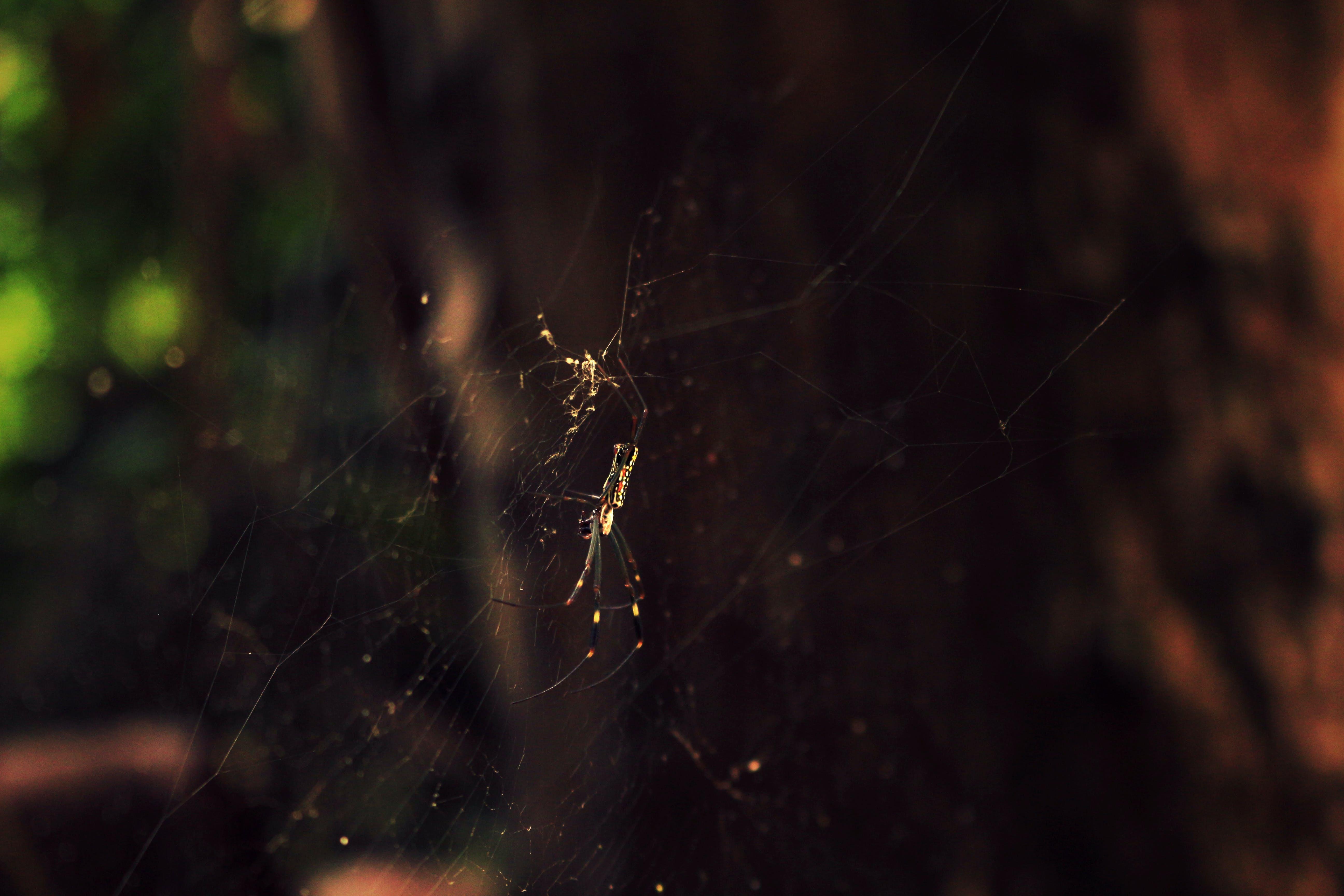 insekt, natur, netz