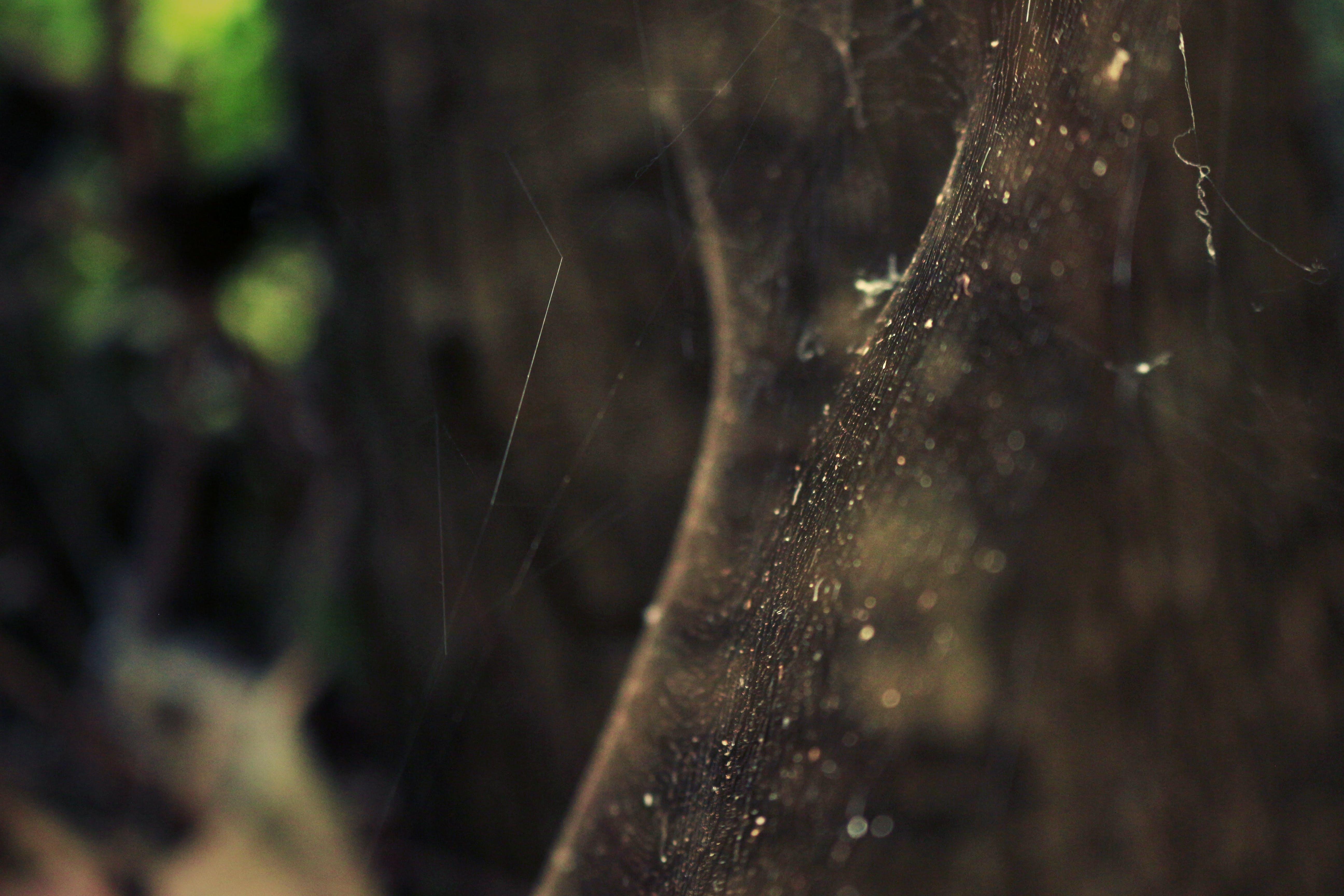 Kostenloses Stock Foto zu insekt, natur, netz, spinne