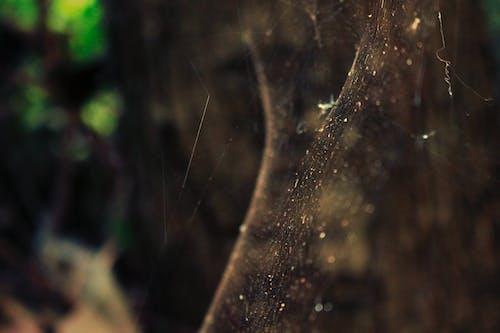 Безкоштовне стокове фото на тему «веб, дикий, комаха, павук»