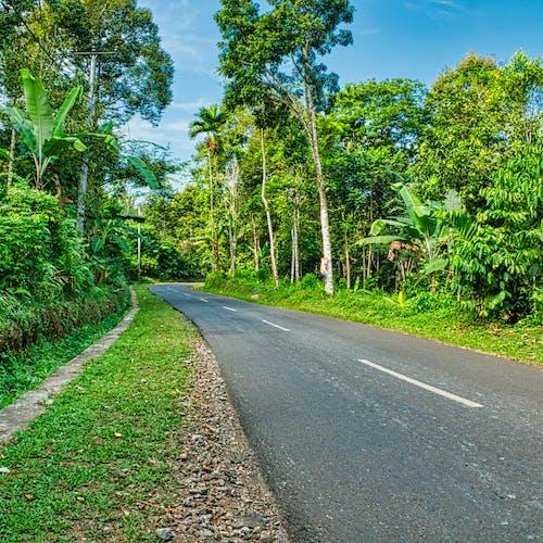 Foto profissional grátis de árvores, asfalto, desocupado, estrada