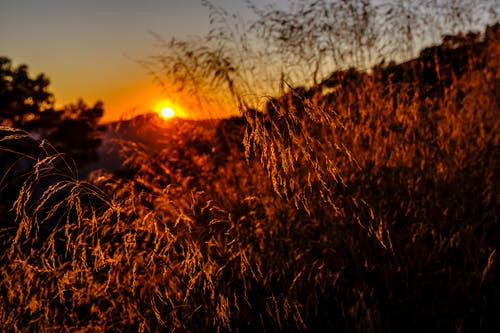 Free stock photo of dramatic, dry grass, sunset
