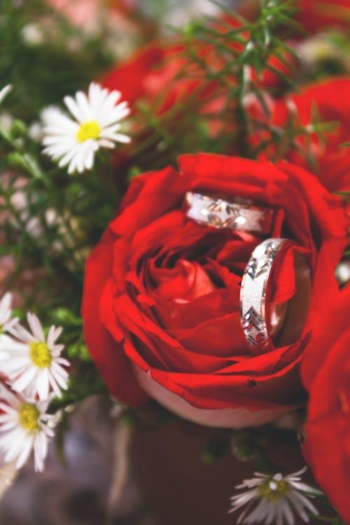 婚禮, 紅玫瑰 的 免费素材照片