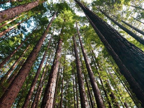 Photos gratuites de arbres, australie, contre-plongée, environnement