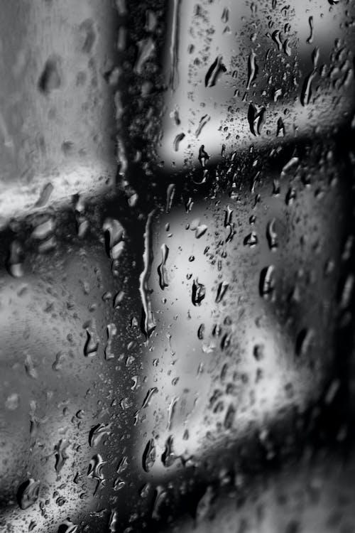 คลังภาพถ่ายฟรี ของ การถ่ายภาพมาโคร, ขาวดำ, น้ำ, ฝน