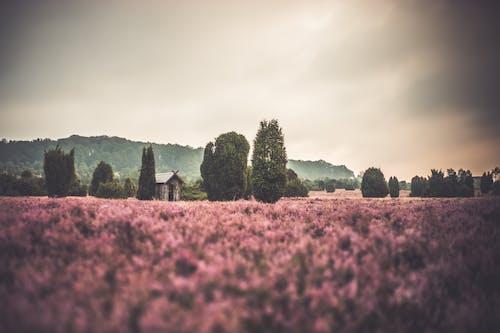 Бесплатное стоковое фото с 50 мм, германия, деревья, дневной свет